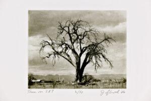 Tree on 287 - Photogravure by Jon Lybrook
