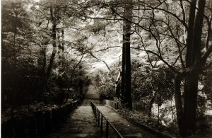 Stairs through the Forest by Jon Lybrook