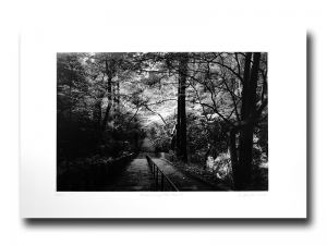 Stairs through the forest - Photogravure by Jon Lybrook